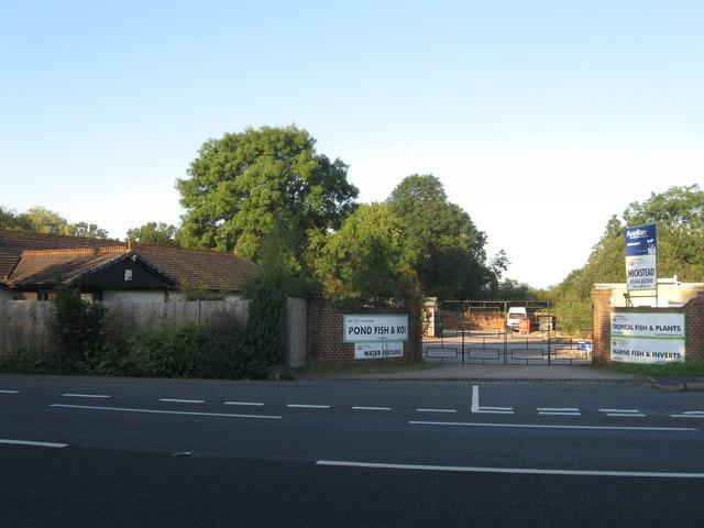 Maidenhead Aquatics, London Road, Hickstead