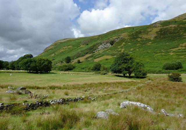 Pasture in Cwm Brefi, Ceredigion