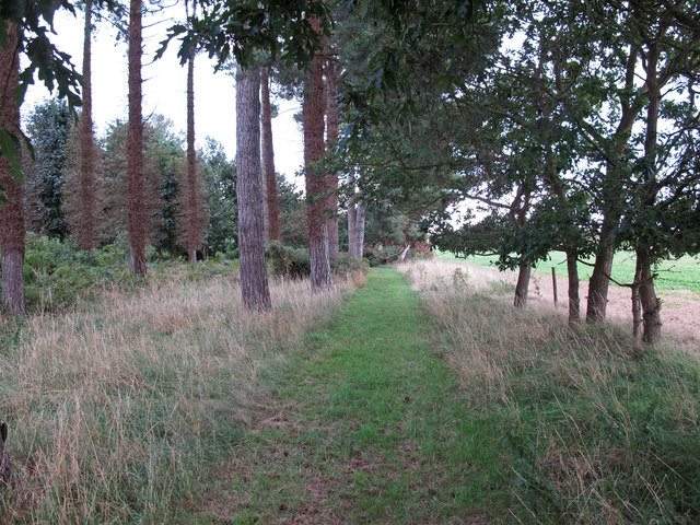 Public footpath at the edge of Tunstall Forest, Sudbourne