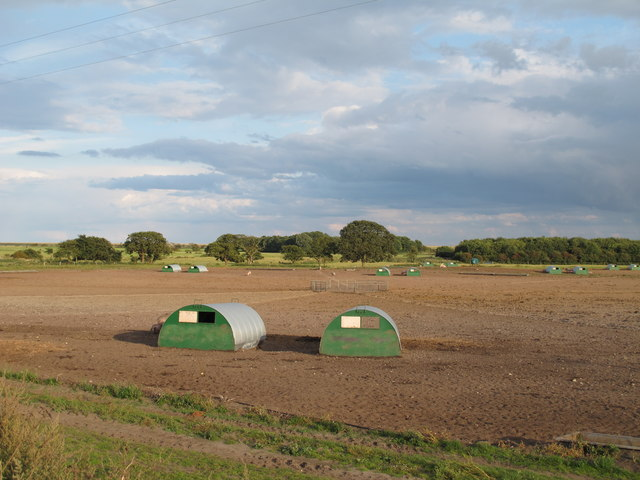 Pig huts near Oak Hill, Sudbourne