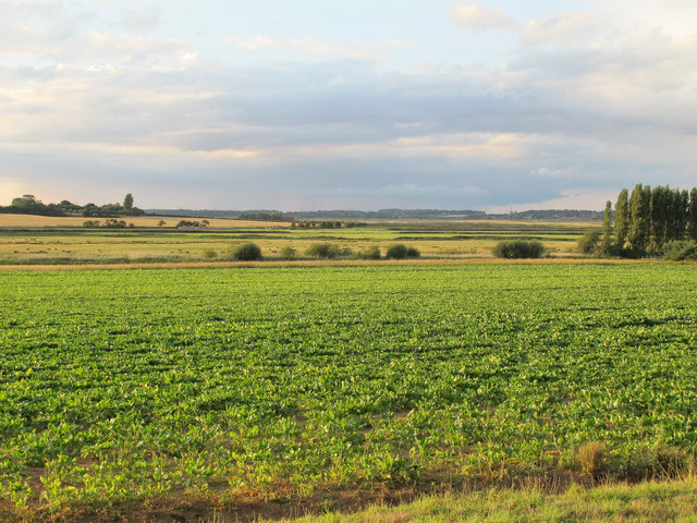 Looking over arable land to the Alde Valley, Sudbourne