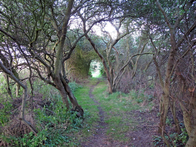 Track through the trees, Ferry Lane, Sudbourne