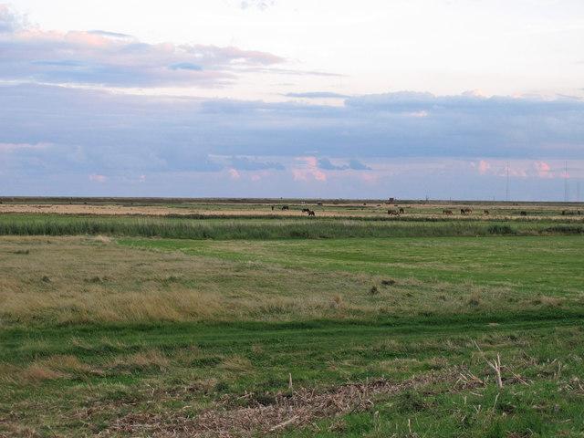 Horses on Sudbourne Marsh