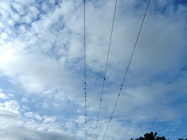 Swallows on the telephone wires