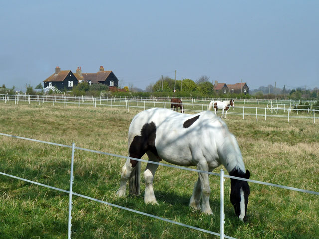 Horse paddocks, Little Woodcote Estate