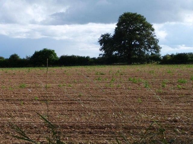 Farmland east of Portway Barn