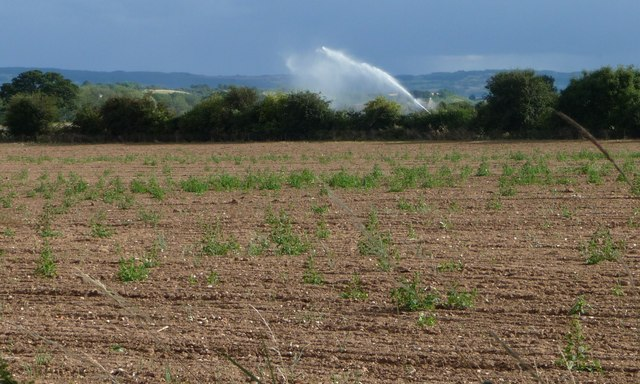 Irrigation near Abbot's Salford