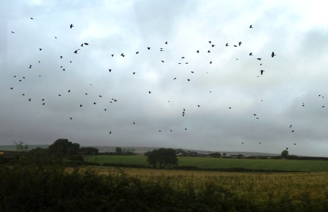 Fields and crows near Scurlage looking towards coast