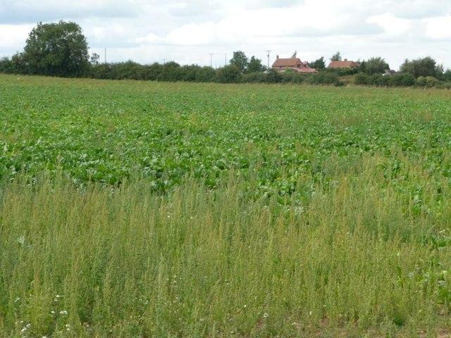 Farmland north of New Inn Lane