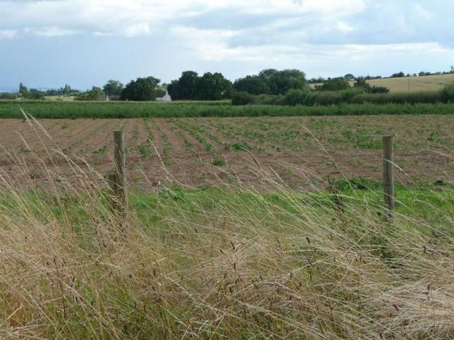 Farmland west of Portway Barn