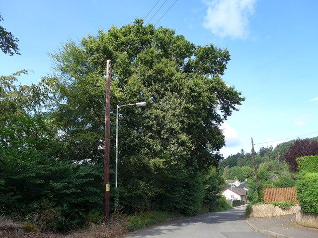 Telegraph pole in Sauchie Road