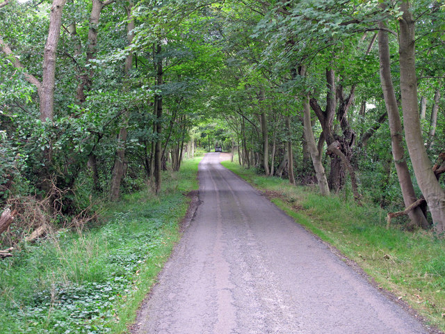 Road from RSPB Minsmere to Eastbridge
