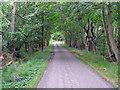 TM4567 : Road from RSPB Minsmere to Eastbridge by Roger Jones