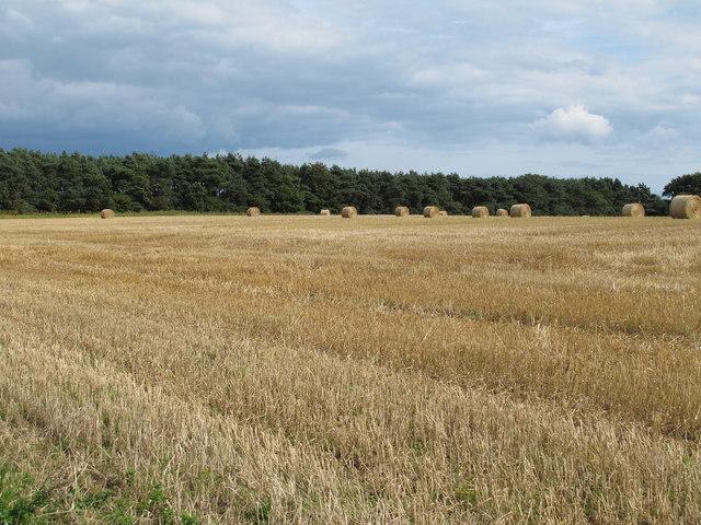 Recently harvested field near Eastbridge Farm