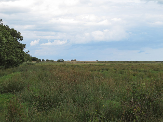 Marshy pasture near Eastbridge Chapel remains