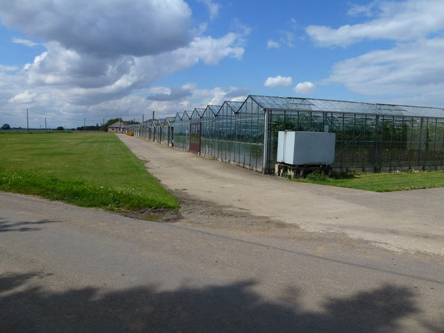 Large glasshouse complex on Stockhouse Lane, Surfleet
