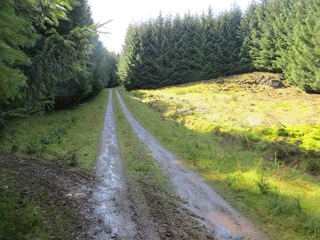 Logging road, Griffin Forest