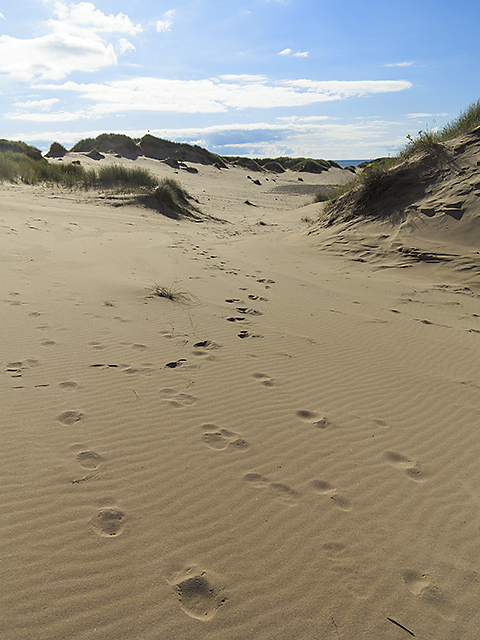 Sand dunes at Forvie