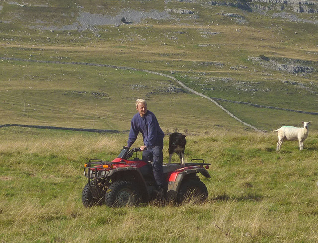 Man and dog working the sheep