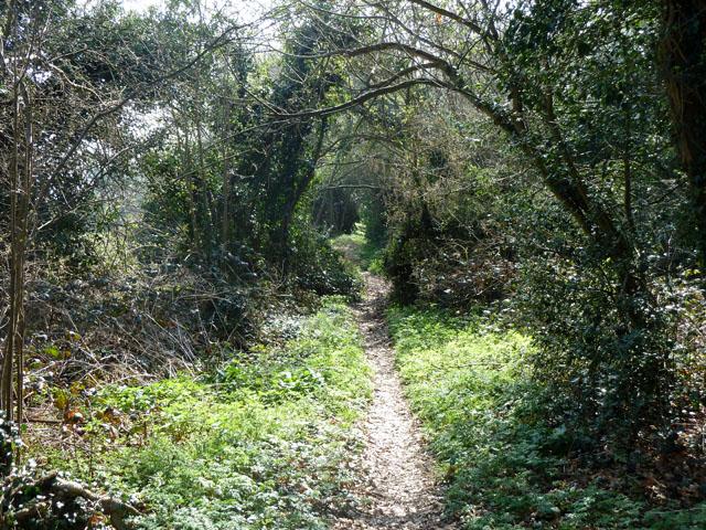 Footpath from Freedown Lane to Croydon Lane