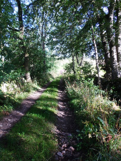 Shaded track, SE from near Tillynickle