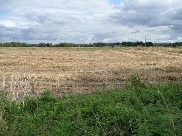 Harvested wheatfield, Vale of Evesham