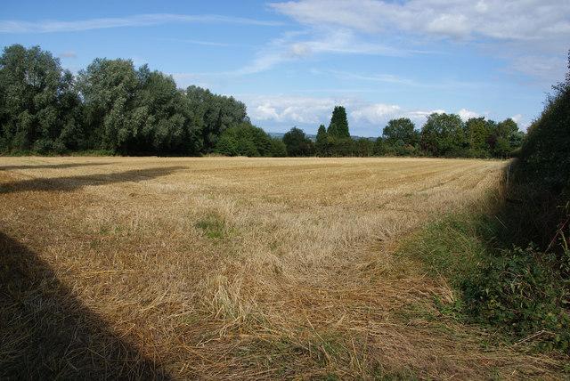 Harvested wheat field near Bramshall