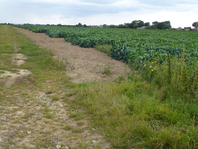 Track and cabbages south of Risegate