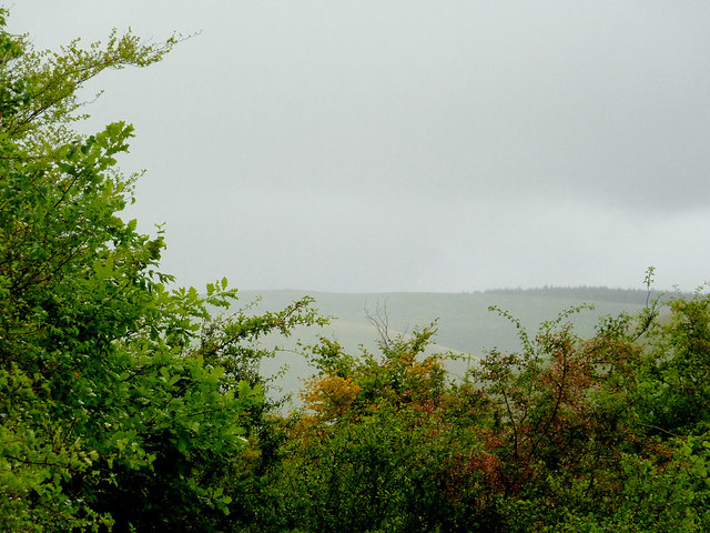 Across the treetops (1), Cwm Doethie, Ceredigion