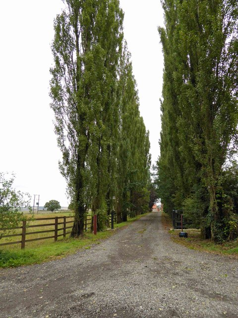 Poplar tree lined drive to Anderson Farm or is it Coultas Farm as per the map?