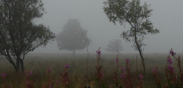 Leash Fen in mist