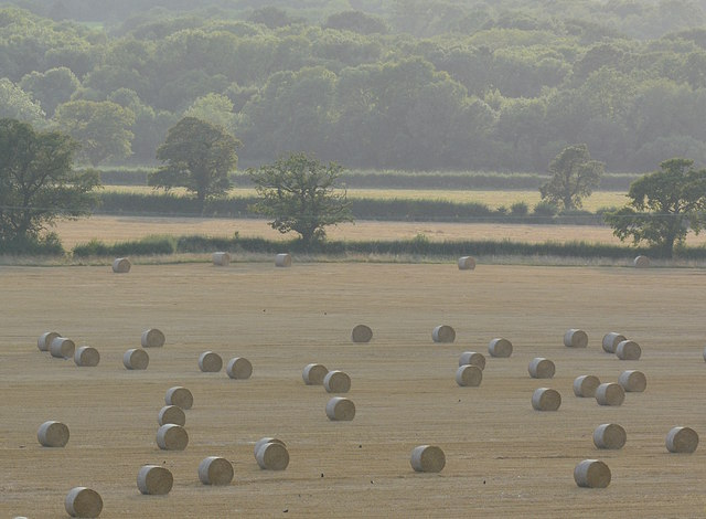 Scattered straw bales near Roundway, Wiltshire