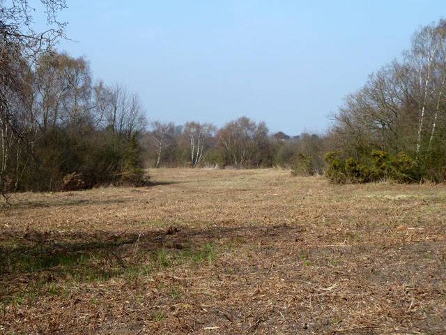 Area cleared of scrub, Banstead Downs