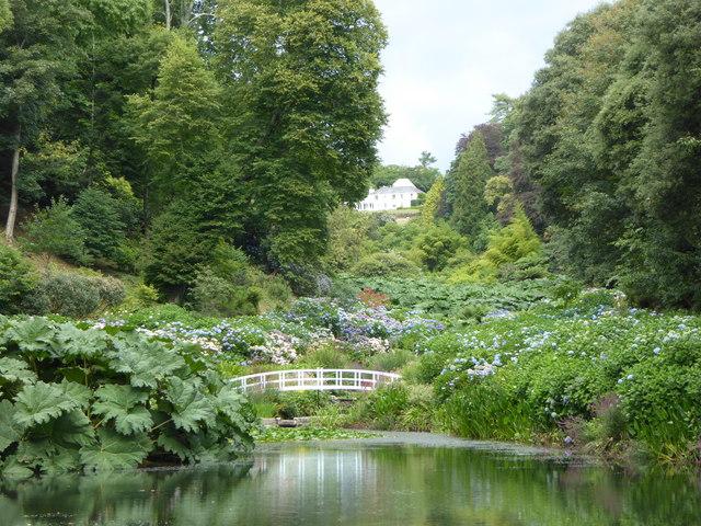 The Hydrangea Valley at Trebah Gardens