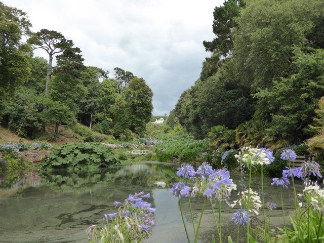 Agapanthus flowers by the pond at Trebah Gardens