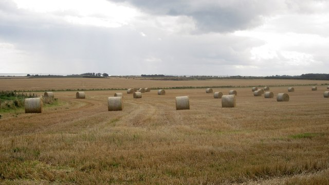 Straw bales in a field at Low Stead