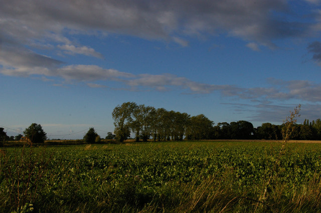 View north across the fields towards Banningham