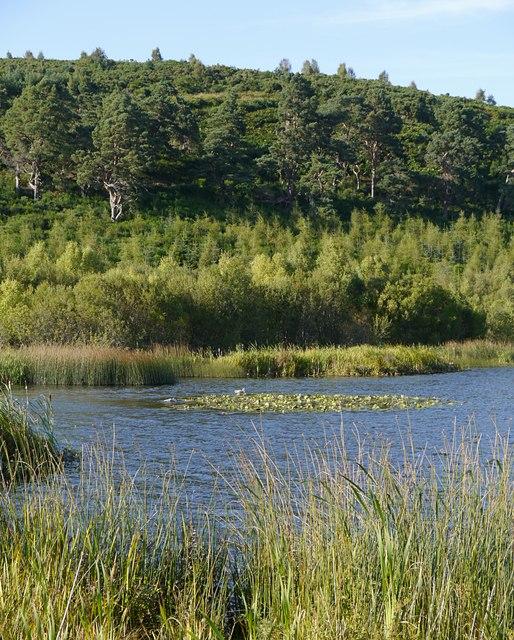 Western end of Loch Kinellan