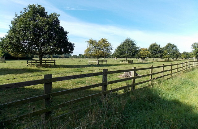 Line of fenced-off trees near Market Bosworth
