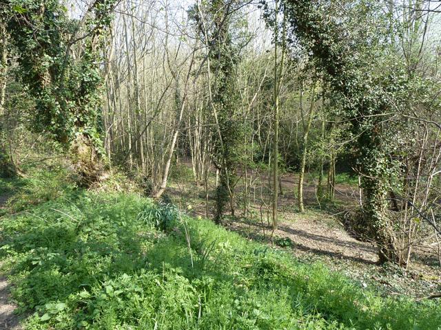 Woodland behind Oakhurst Rise