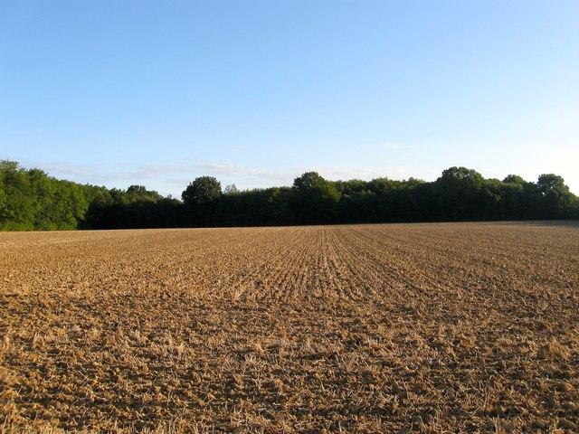 Pond Field/Wantley Field