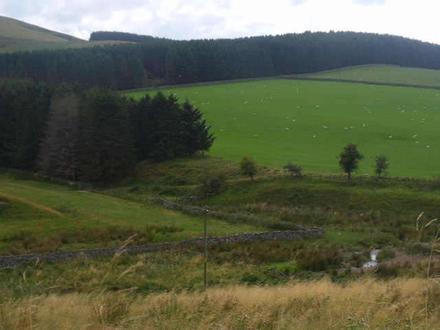 Shelter belt plantations above Atton Burn near Yetholm