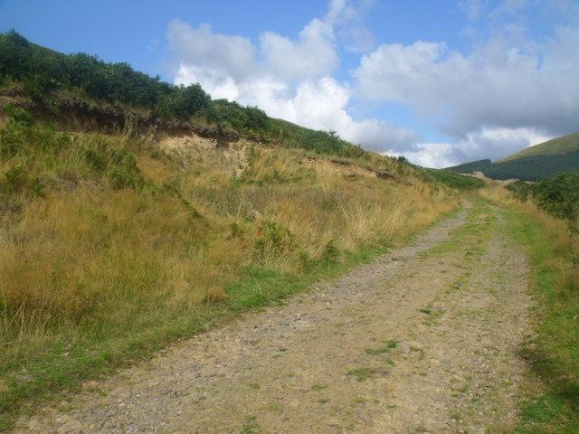 Forest track near Blakedean, Yetholm
