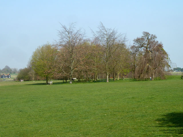 Tree clump, Oaks Park