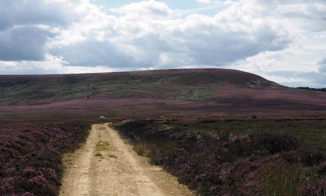 Moorland of Whitestones Ridge