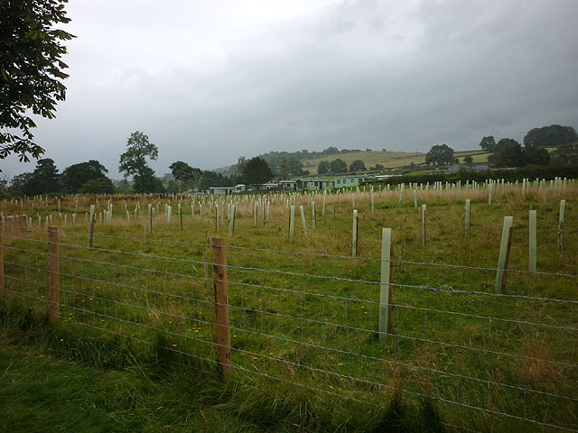 Newly planted trees at Stainforth Force