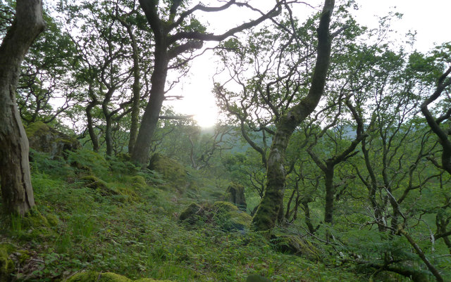 Wooded hillside by Gallt y Llyn