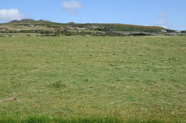 Field cut for silage