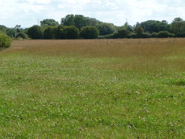 Clover-filled meadow, north-west of Filkins