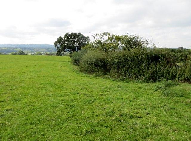 Fields at Stydd
